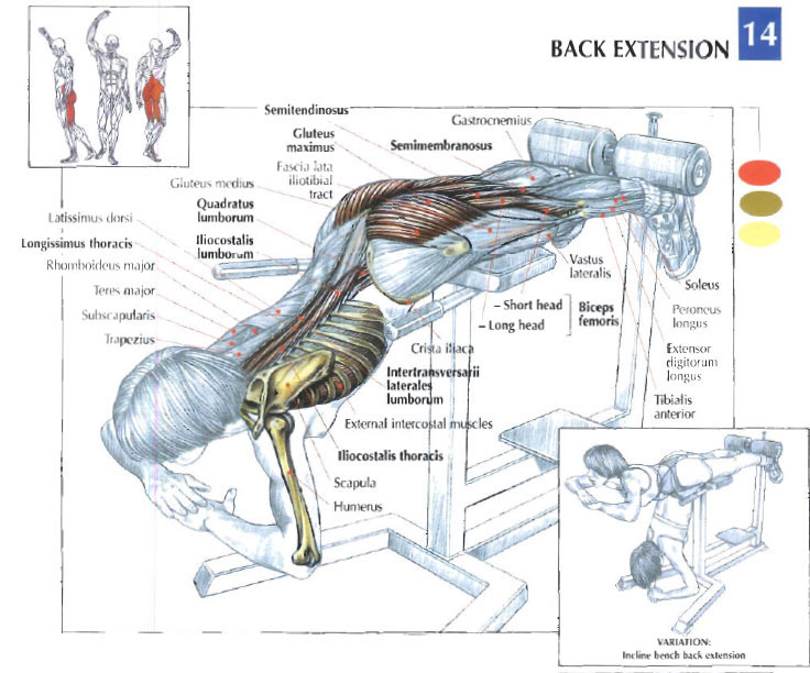 Back Extension Illustration