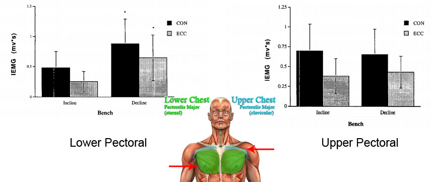 Upper and Lower Pectoral Targeting