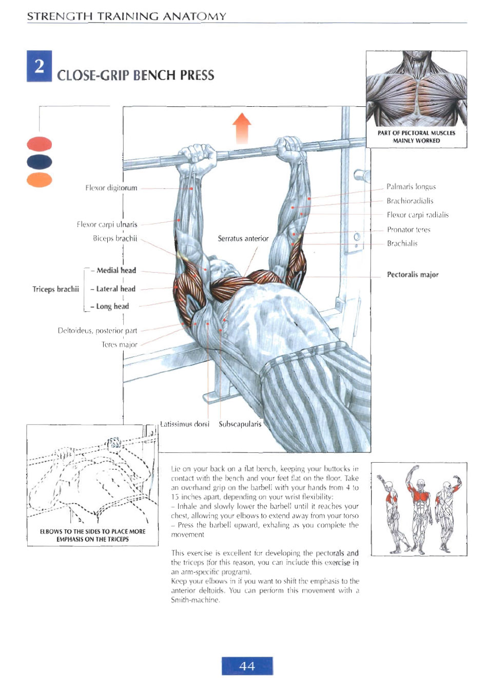 Strength Training Anatomy Review - Sports Science .co